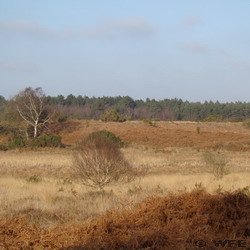Buxton Heath