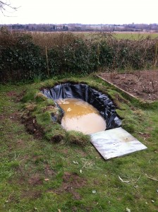 Rob's pond (6)
