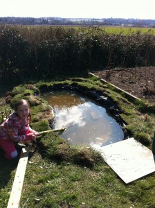 Rob's pond (7)
