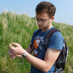 Will translocating a Slow Worm