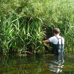 Water vole survey