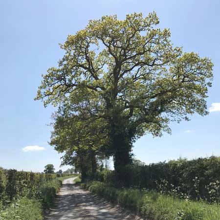 Tree Surveys | Arboriculture