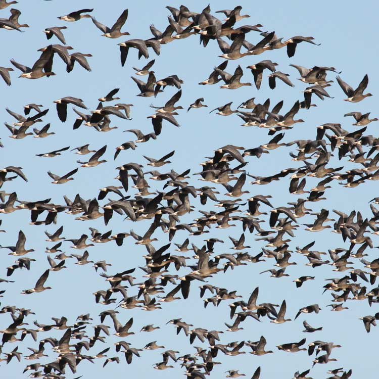 Bird Surveys