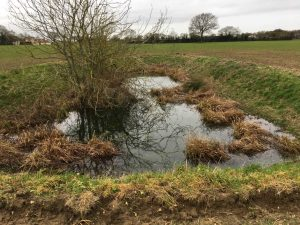 Ecological Enhancement Advice targeted by habitat